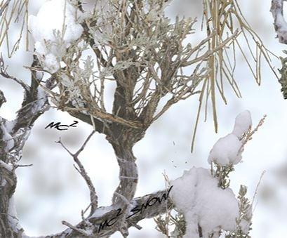 MC2 Snow